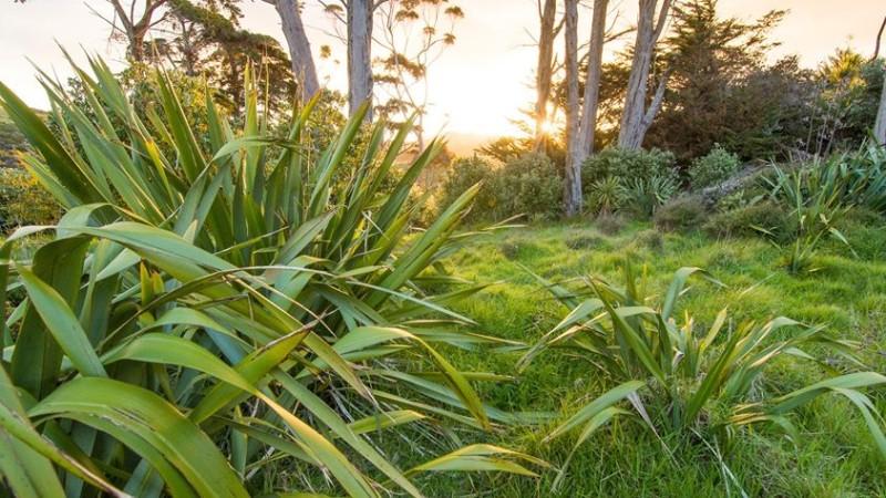 Nový Zeland